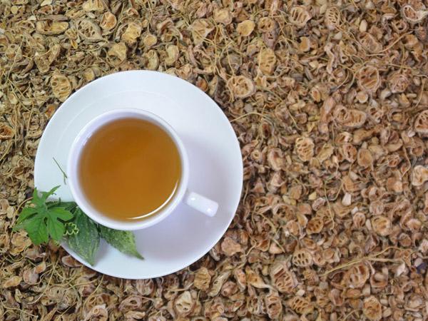 trà khổ qua rừng