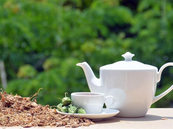 Vì sao trà khổ qua rừng Mudaru giúp chữa bệnh tiểu đường