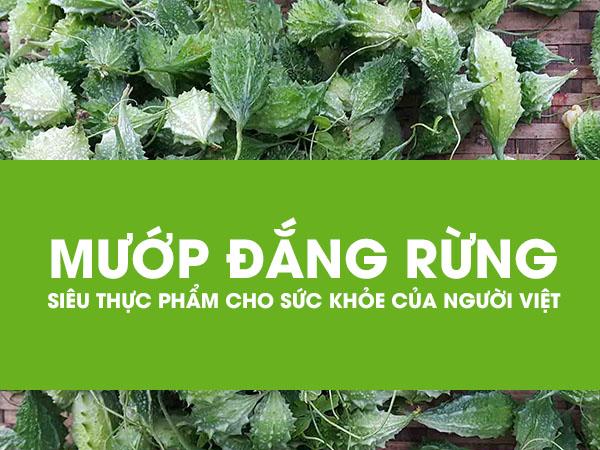 cong dung cua kho qua rung