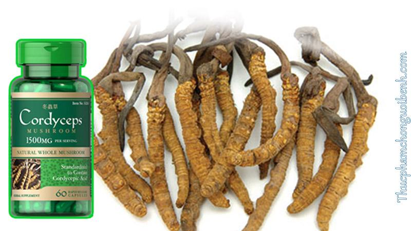 tăng cường sinh lực Cordyceps Mushroom