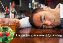 cà gai leo giải rượu