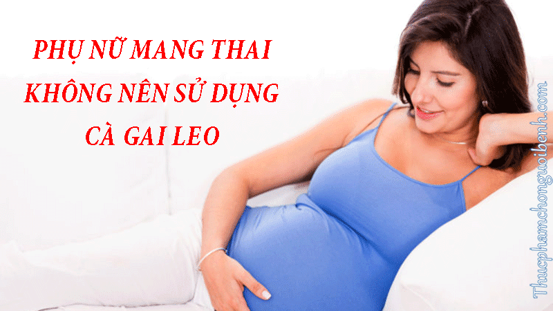 uống cà gai leo khi mang thai