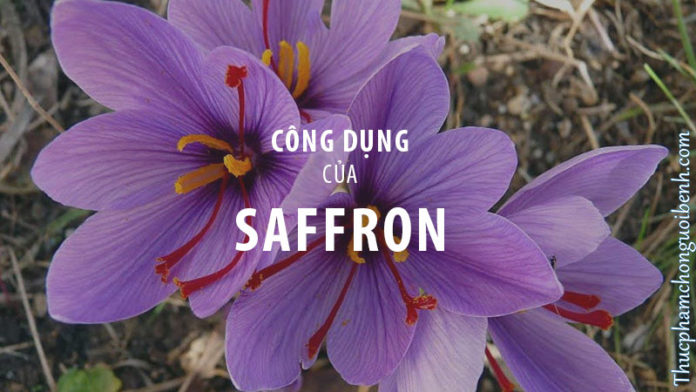 cong dung cua saffron