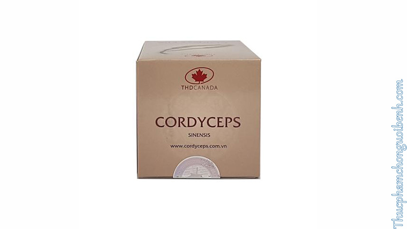 đông trùng hạ thảo Cordyceps Sinensis THD Canada có tốt không