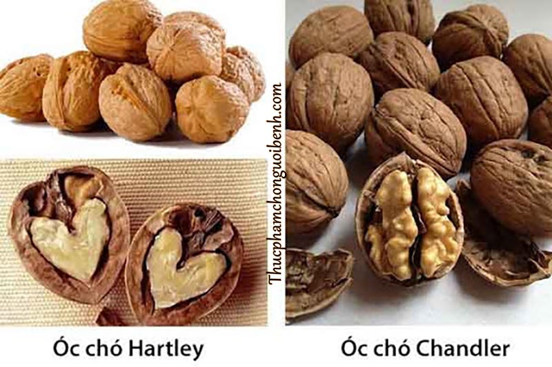 hat-oc-cho-hartley-chandler